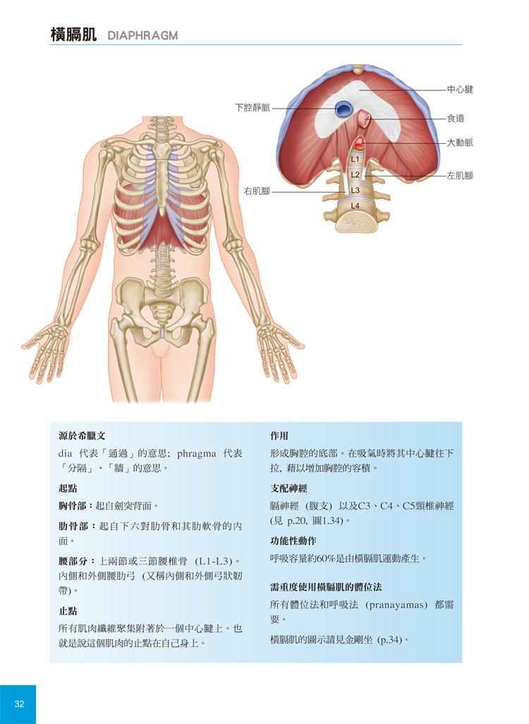 瑜伽解剖精解-從肌肉運作原理解析瑜伽體位-preview-2