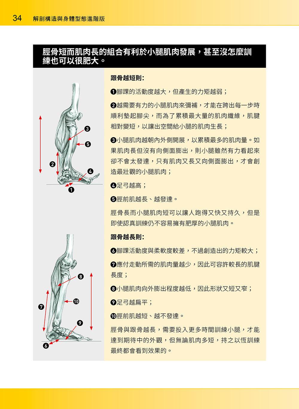 進階肌力訓練解剖聖經 2 - 高手只做不說的關鍵檔案 (附 加大手繪肌肉解剖圖海報)-preview-8